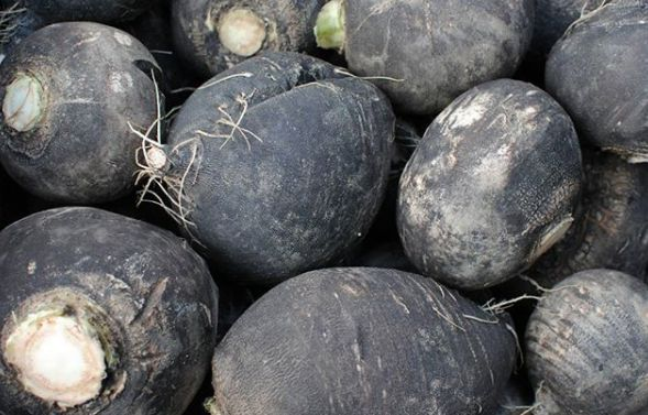#DidYouKnow there are black radishes? They also come in pink, red, purple, white, yellow, and green! Being a rich source of Vitamin-B complex, zinc, and phosphorus, radishes work as an effective blood purifier and eliminates all sorts of toxins as well as waste materials from our body. #FoodFacts #FarmersMarket #BuyLocal #EatLocal #MoreVeggies #HealthyLifeStyle #CleanEating #Yum #Vegan #Raw