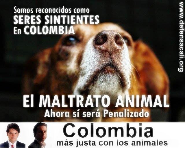 Nueva ley de protección animal en Colombia   Defensa Animal Cali