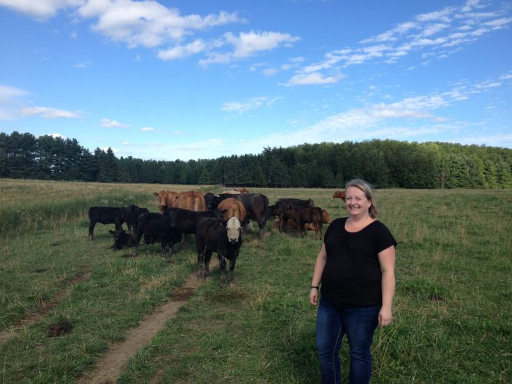 Cattle on certified organic pasture at Vibrant Farms located in southwestern Ontario near Kitchener-Waterloo in Baden.