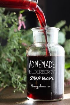 Elderberry Syrup recipe. Wild food. Free food. Foraging.