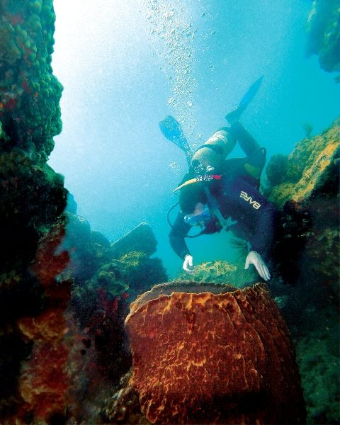 Best Places to Learn to Scuba Dive • Scuba Diver Life