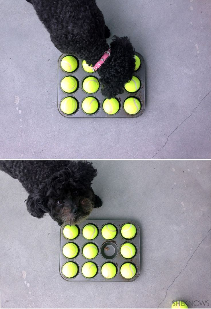 fun game for dogs ~ All you need is a muffin tin, 12 tennis balls and a pup for a doggone good time ~Materials: Muffin tin Dog treats 12 Tennis balls