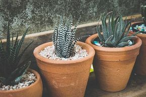 Descubra como e com que frequência plantar essas plantas modernas e versáteis que podem …   – Designing with Succulents