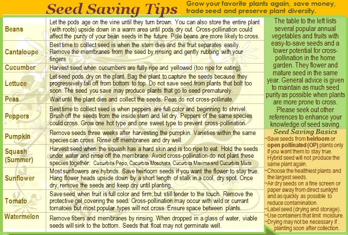 Seed-saving Tips