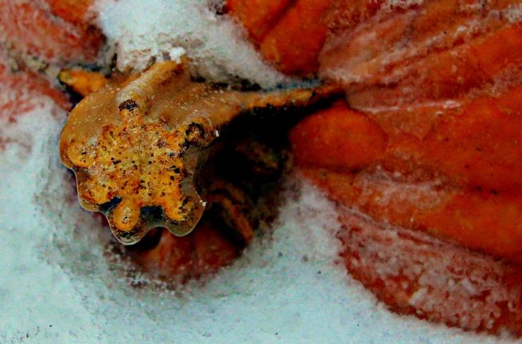 cold pumpkin
