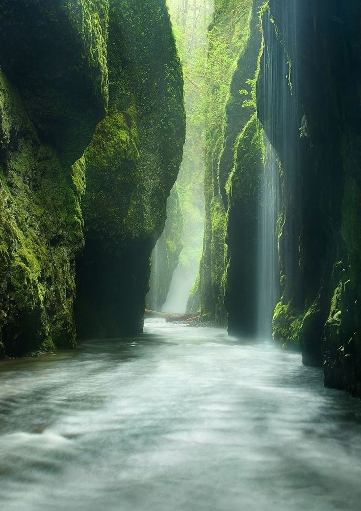 Rainforest Canyon Oneonta Gorge Oregon
