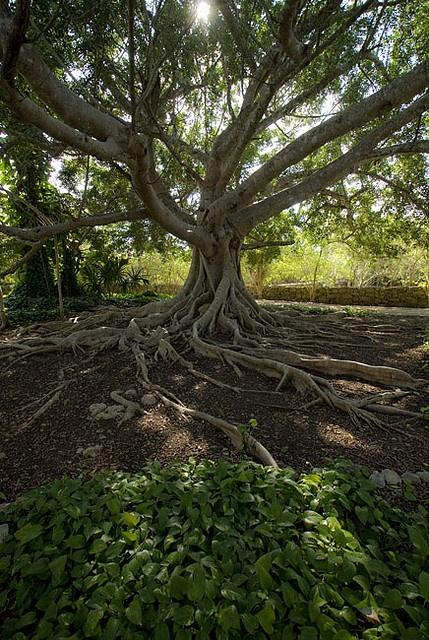 Sheer Wrap - Mother Nature Tree by VIDA VIDA wZKmFe