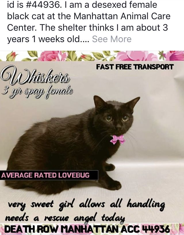 Whiskers To Die 10 31 18 Kittens Cats Need Rescued Looking For A Good Home Cats Staten Island New York Manhattan New York