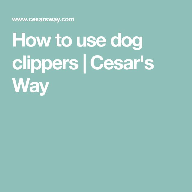 How to use dog clippers | Cesar's Way