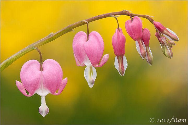 faire livrer un bouquet de fleurs à domicile 048 #fleurs #bouquet