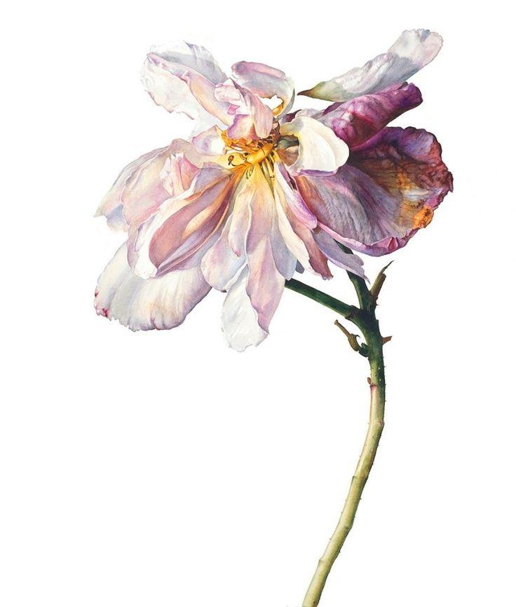 198 best Acuarela de flor para pintar images on Pinterest | Art ...