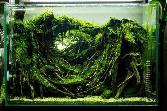 Aquascape Aquarium Design Ideas 56 | Aquascaping
