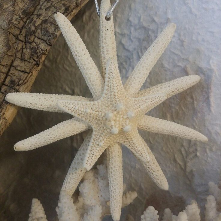Star light, star bright! SEA star Christmas Tree ornaments are on sale for a limited time