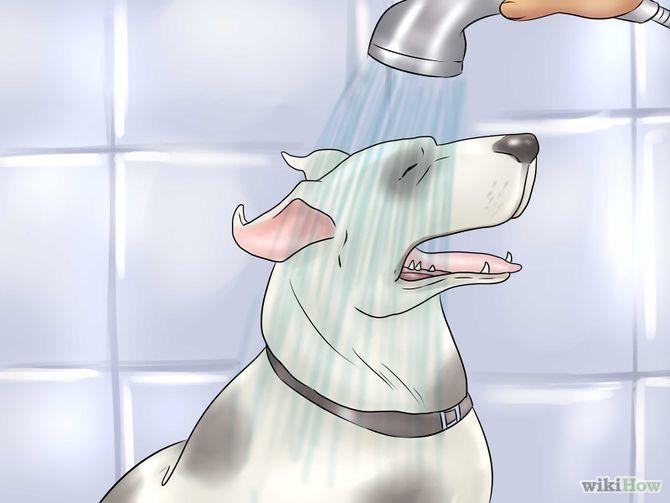 Aprende a usar vinagre de sidra de manzana para los perros vía es.wikihow.com