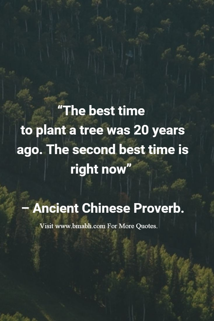 """The best time  to plant a tree was 20 years ago. The second best time is right now""   – Ancient Chinese Proverb.: https://www.facebook.com/bmabh"