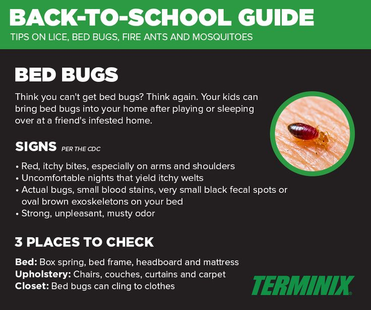 44 best Bed bugs images on Pinterest Bed bugs Pest control and