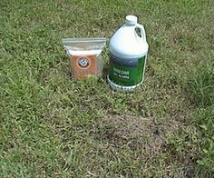 How to Kill Fire Ants and Commit Genocide using vinegar and baking soda. The boy would have fun with this.