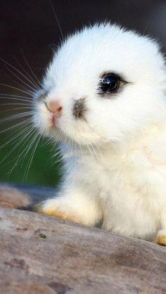 Söt liten kaninunge.