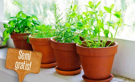 Orto sul balcone: ortaggi che potete coltivare gratis senza comprare i semi! | Giardinieri in affitto
