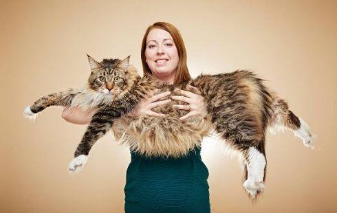 長さ118.33センチ! 世界で一番長い飼い猫がギネスに認定される