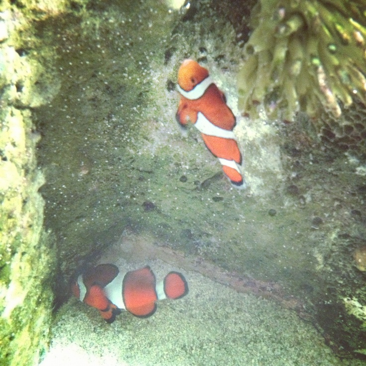 I´d founded Nemo