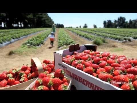 Local Produce, Local Food, Farms, Norfolk County