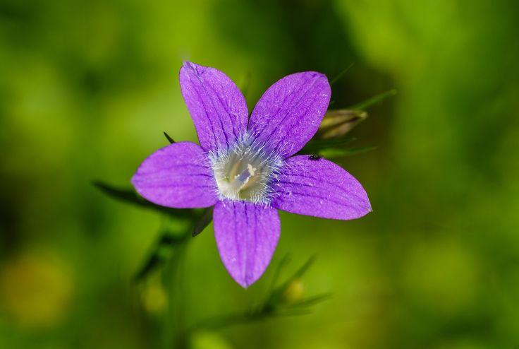Flower by Mateusz Kuca on 500px