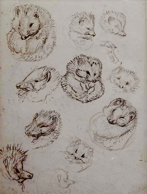 Sketches of Mrs. Tiggy Winkly, 1905. Beatrix Potter