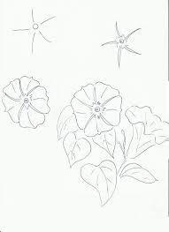 """Résultat de recherche d'images pour """"liseron geometrique"""""""