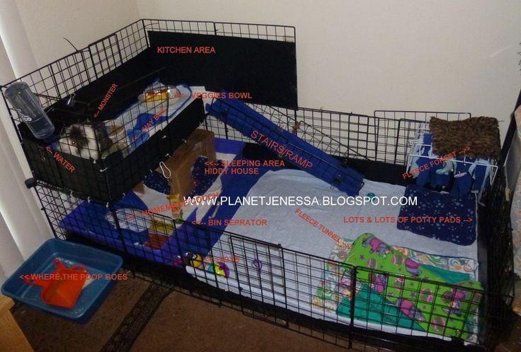 Guinea pig cages for two guinea pig cage a k a homemade for Guinea pig cages for two