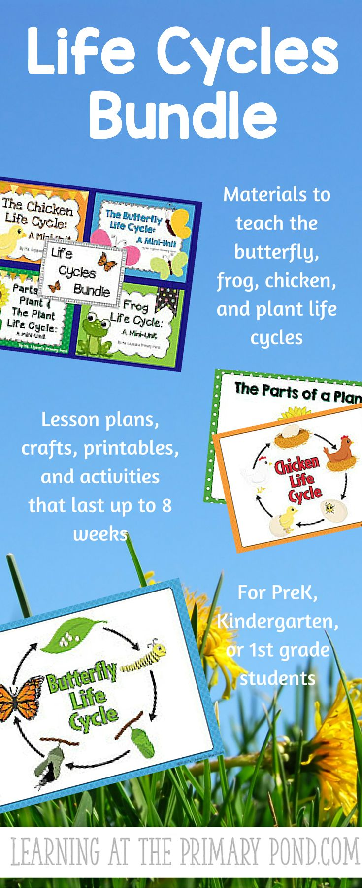 53 best science life cycles images on pinterest teaching life cycles activities lesson plans for preschool kindergarten or 1st grade robcynllc Choice Image