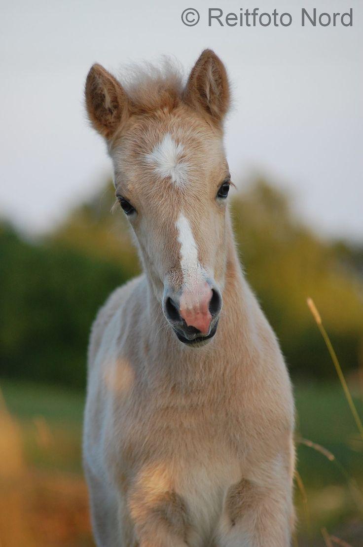 palomino foal - photo #12