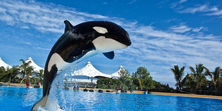 Exportvergunning orka Morgan is rechtsgeldig