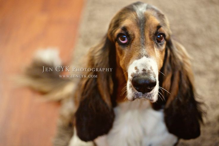 Hound Dog Pictures Puppies