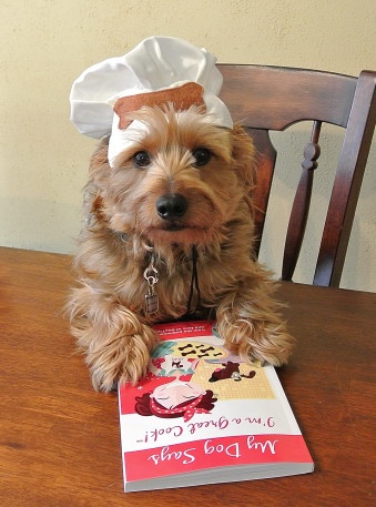 Image result for yorkie cooking owner