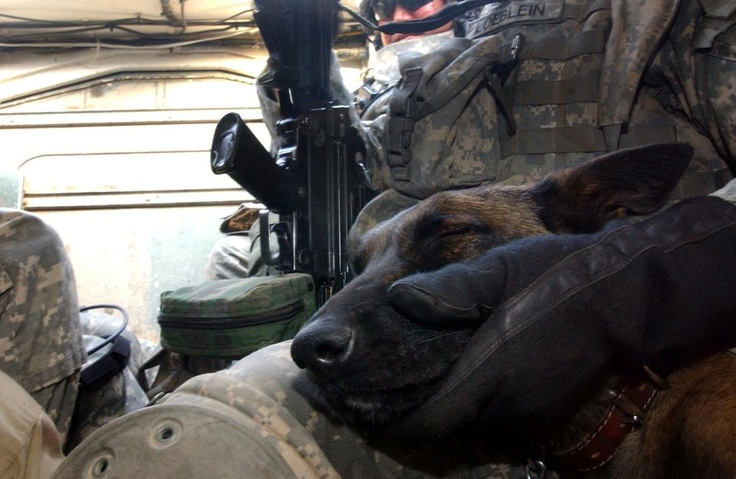 MWD Olivia inside a US Army Stryker after a morning of conducting vehicle searches in Mosul, Iraq.