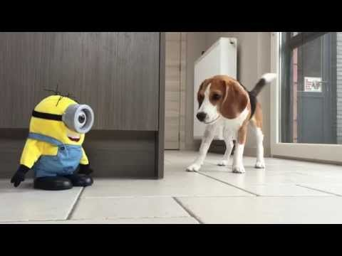 Funny minion singing Katy Perry Roar song / Katy Perry - Roar (Official) / (Lyric Video) by Minion - YouTube