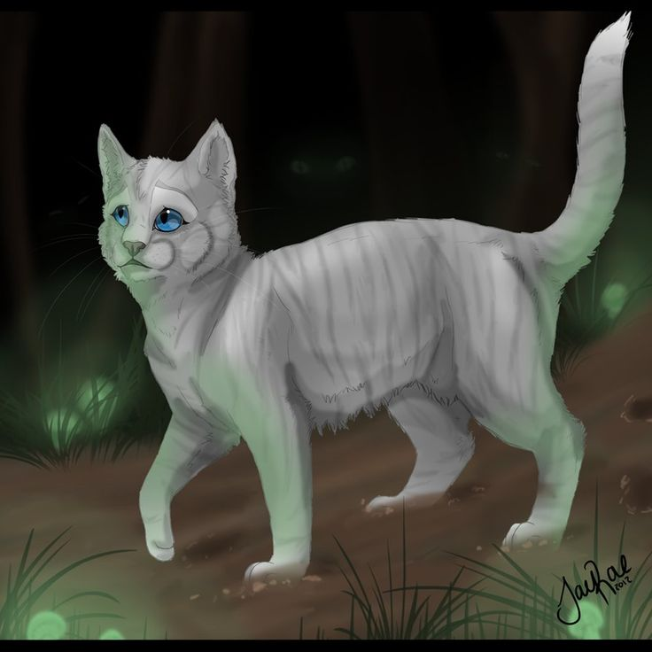 286 Best Images About Warrior Cats :) On Pinterest