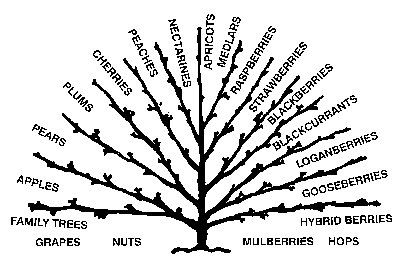 multi grafted fruit tree