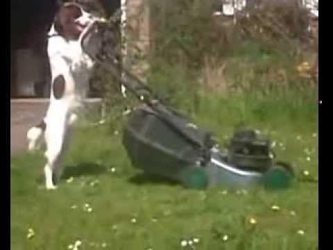 Funniest Dog Video Ever Seen (HD Version)  Dog cleans the house, while I am at work ! A must watch video clip !