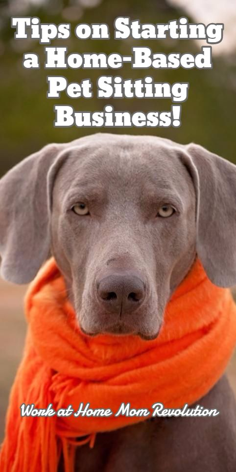 Work at home how to start your own pet sitting business for Be a dog sitter