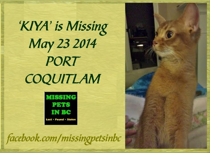 'KIYA' MISSING FEMALE RED ABYSSINIAN CAT in PORT COQUITLAM (Wilson Ave & Shaughnessy) MAY 23 2014