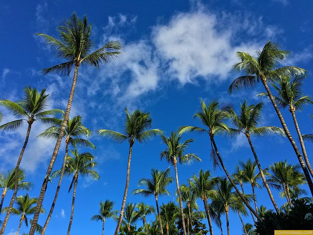 Hawaii vacation deals & news: February 2, 2016...shared by http://shop.kapotrading.com