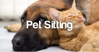http://www.petstayadvisor.com.au/article/The-whys-and-hows-of-pet-sitting