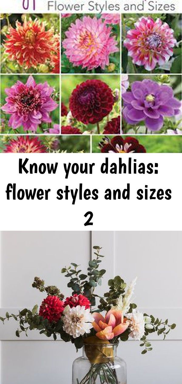 Know Your Dahlias Flower Styles And Sizes 2 Hydrangea Not Blooming Flowers Flower Fashion