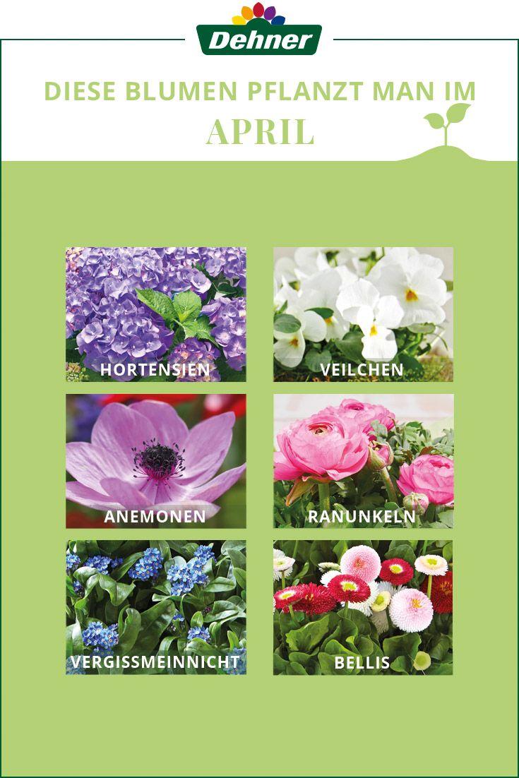 Im April Wird Es Im Garten Oder Balkon Farbenfroh Denn Jetzt Ist