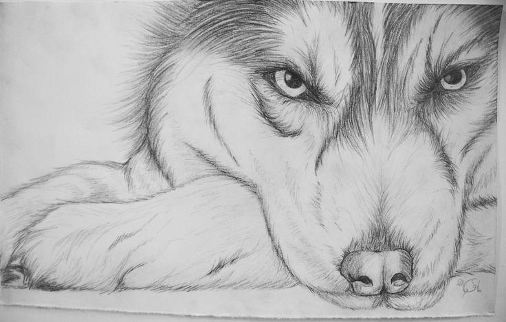 зимнего рисунки карандашом звери легкие жесть