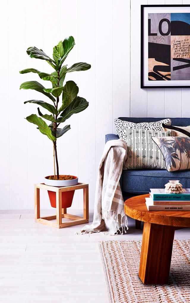 Find out how to style your indoor plants (and keep them alive!) Story: homes+