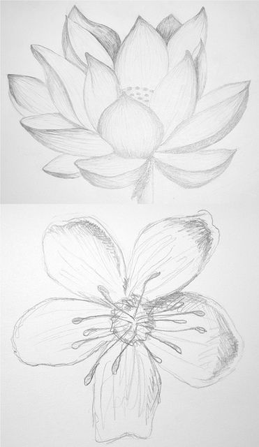 pretty drawings of lotus and cherry blossom