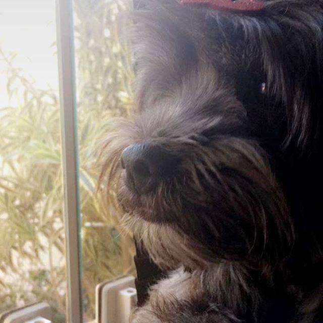 Top 100 chin length hairstyles photos Esperando a minha mamãe que foi viajar e só volta quarta feira! Hoje poderia ser quarta já né aumigos? Estou com tanta saudade! Volta logo mamãe! 😍 #lhasaapso #lhasa #dog #lhasapoo #cao #lindo #dogs #love #instadog #cachorro #dogsofinstagram #pet #amigo #friend #pets #animal #animals #bomdia #beautiful #cute #sol #dia #mylove #buzz #bob #bobhaircut...